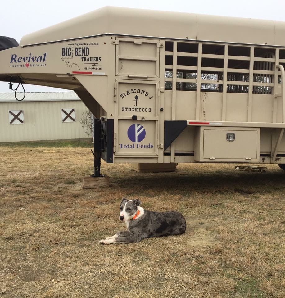 Hanging tree cow dogs for sale - Gallery