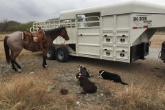texas-stockdogs