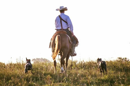 hangin' tree cow dogs training and for sale