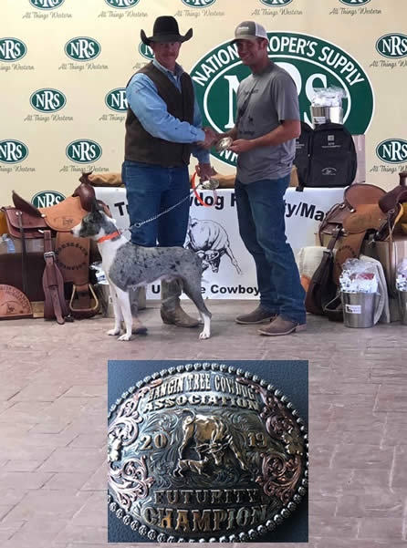 Diamond J Creed - 2018 Nursery Champion- 3 Shy Cattledog Ranch Trial